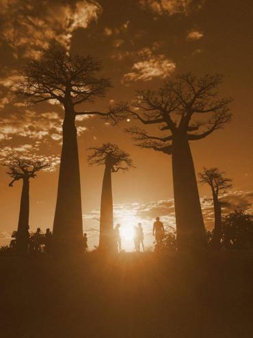 baobab ağacı - civciv-x3NF4