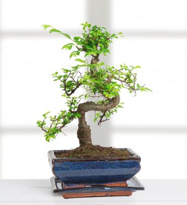 bonsai - yollarda-bul-beni-2BLLs