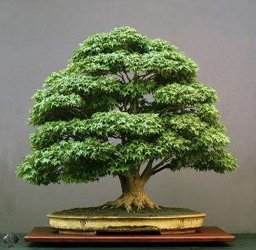 bonsai - yollarda-bul-beni-44tQp