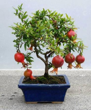 bonsai - yollarda-bul-beni-70PjK